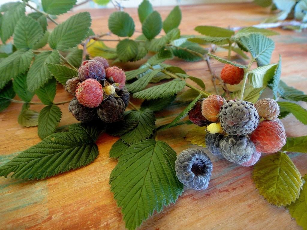 piracaia fruta framboesa montanha